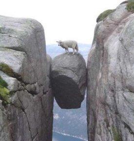 Dangerous_Sheep