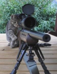 cat_mice